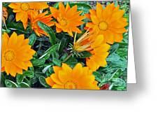 I Love Orange Flowers Greeting Card
