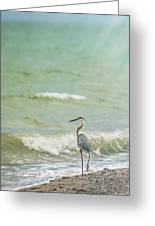 I Saw The Heron Standing Greeting Card