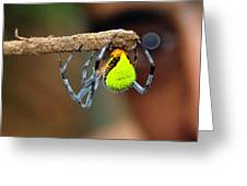 I See You Spider Greeting Card