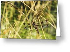 I Spy A Dragonfly Greeting Card