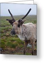 I Think It Might Reindeer Greeting Card