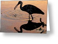 Ibis At Dusk Greeting Card