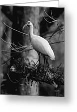 Ibis In Black And White  Greeting Card