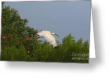Ibis In The Oleander Greeting Card