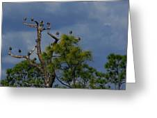 Ibis In The Pines - Debbie May Greeting Card