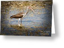 Ibis In The Rough Greeting Card