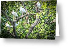 Ibises In A Tree Greeting Card