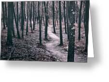 Ice Age Trail Near Lapham Peak Greeting Card