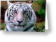 Ice Blue Eyes Of The Tiger Greeting Card