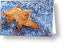 Ice-bound Leaf Greeting Card