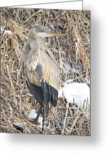 Ice Cold Heron Greeting Card