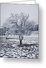 Ice Covered Tree Greeting Card