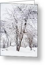 Ice Covered Trees One Painted Greeting Card