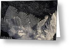 Ice Crystals Form Feather Shapes On Ice Greeting Card