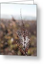 Ice Crystals On Dried Wild Flower Greeting Card