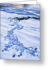 Ice Cube Creek Greeting Card