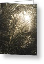 Ice Design On Glass Greeting Card