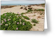 Ice Plant Booms On Pebble Beach Greeting Card