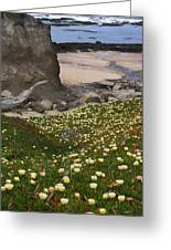 Ice Plants On Moss Beach Greeting Card