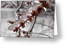 Ice Rain In Springtime Greeting Card