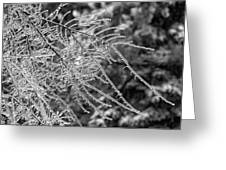 Ice Storm 2 - Bw Greeting Card