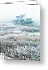 Ice Tree Shenandoah National Park Greeting Card by Thomas R Fletcher