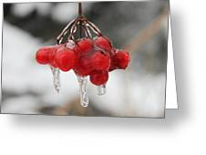Ice Wrapped Berries Greeting Card