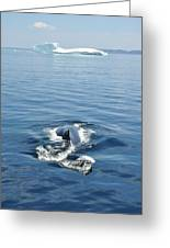 Iceberg And Humpback Greeting Card