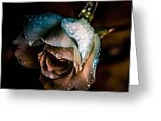 Iceberg Rose Greeting Card