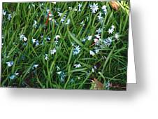 Iceblue Squill Greeting Card