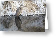 Iced Heron Greeting Card