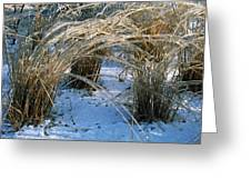 Iced Ornamental Grass Greeting Card