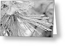 Iced Pine Needles Greeting Card