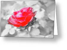 Iced Rose Greeting Card