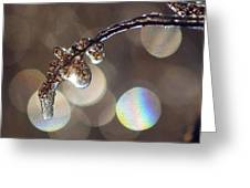 Iced Twig Greeting Card