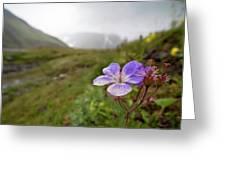 Iceland 35 Greeting Card