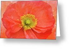 Iceland Poppy 3 Greeting Card