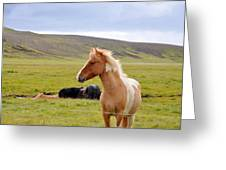 Icelandic Horse Greeting Card by Ambika Jhunjhunwala