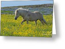 Icelandic Horse, Iceland Greeting Card