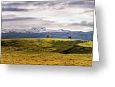 Icelandic Horses On The Countryside  Greeting Card