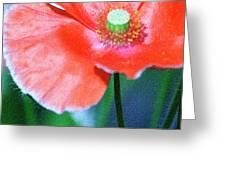 Icelandic Poppy Greeting Card by Bonnie Bruno