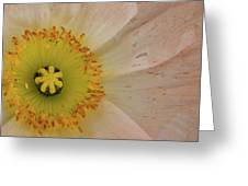 Icelandic Poppy Greeting Card