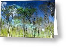 Ichetucknee Reflections Greeting Card