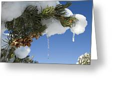 Icicles On Pine Tree Greeting Card