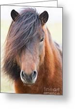 Iclelandic Horse Close Up Greeting Card
