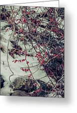 Icy Berries Greeting Card