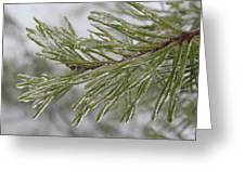 Icy Fingers Of The Pine Greeting Card