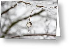 Icy Jewel Greeting Card by Rebecca Cozart
