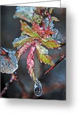 Icy Leaf Greeting Card