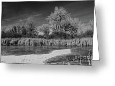 Icy Marsh Greeting Card